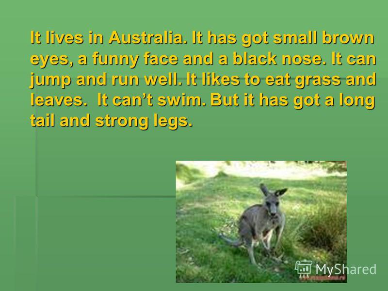 It lives in Australia. It has got small brown eyes, a funny face and a black nose. It can jump and run well. It likes to eat grass and leaves. It cant swim. But it has got a long tail and strong legs.