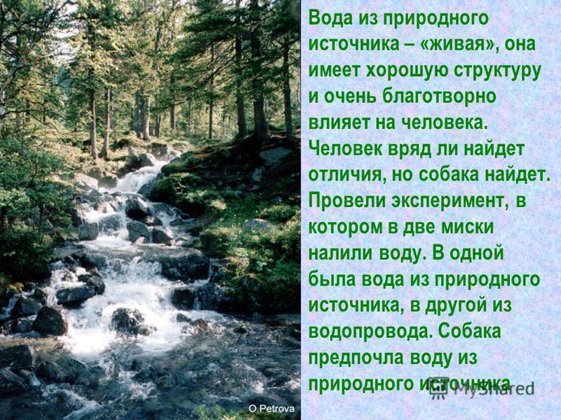 Вода из природного источника – «живая», она имеет хорошую структуру и очень благотворно влияет на человека. Человек вряд ли найдет отличия, но собака найдет. Провели эксперимент, в котором в две миски налили воду. В одной была вода из природного исто