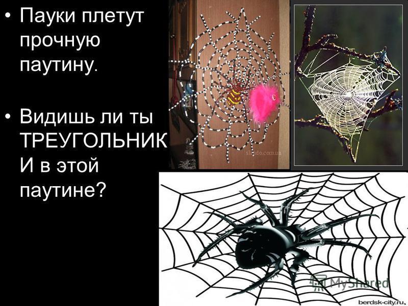 Пауки плетут прочную паутину. Видишь ли ты ТРЕУГОЛЬНИК И в этой паутине?