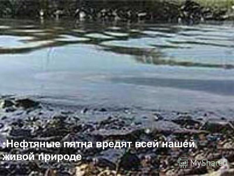 Нефтяные пятна вредят всей нашей живой природе