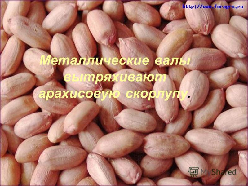 Металлические валы вытряхивают арахисовую скорлупу.