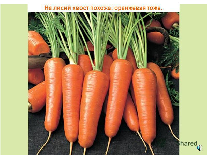 Оранжевой лисице всю ночь морковка снится