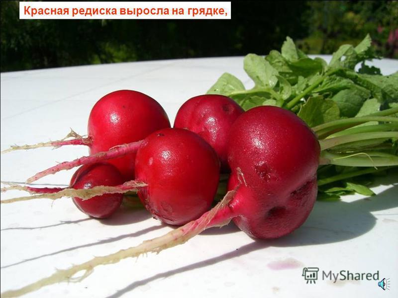 Красный цвет