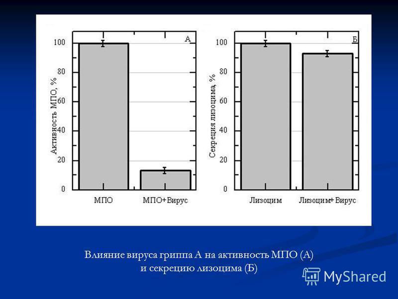 Влияние вируса гриппа А на активность МПО (А) и секрецию лизоцима (Б)