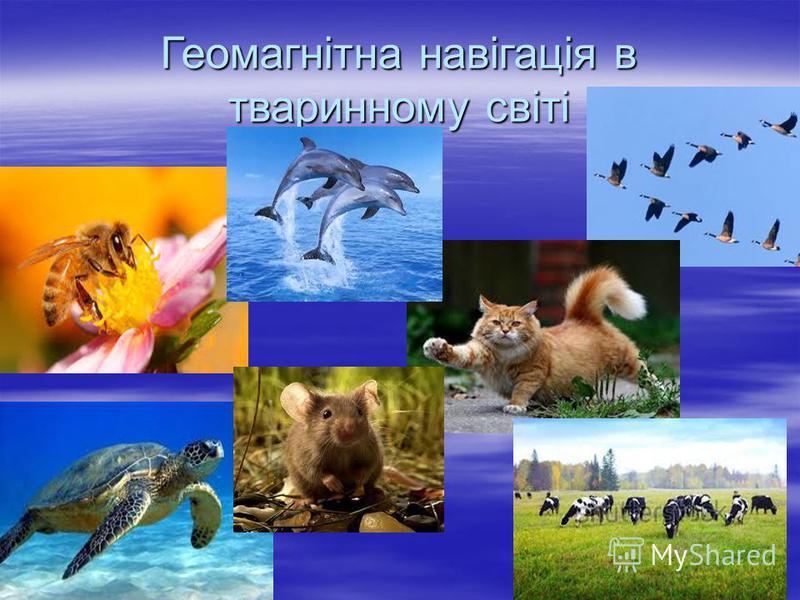 Геомагнітна навігація в тваринному світі