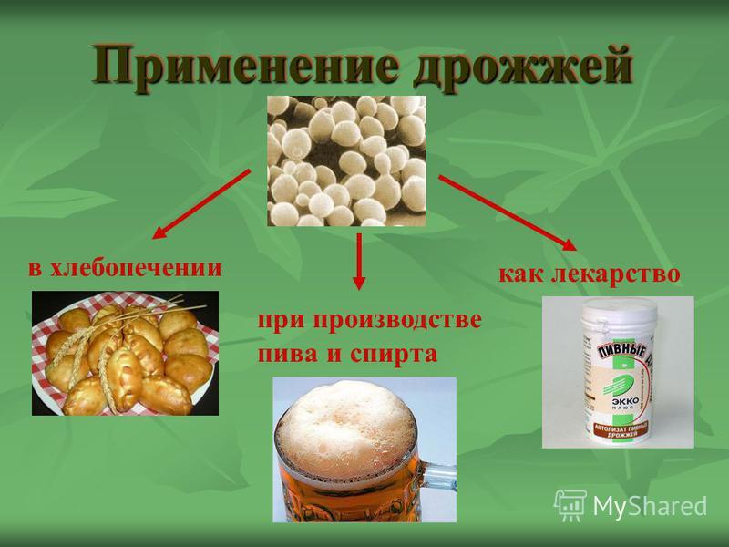Применение дрожжей в хлебопечении при производстве пива и спирта как лекарство