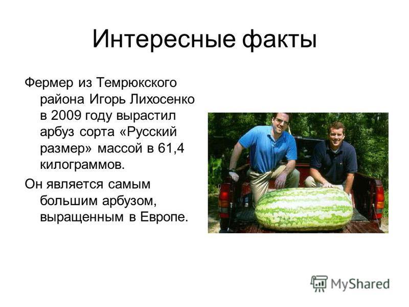 Интересные факты Фермер из Темрюкского района Игорь Лихосенко в 2009 году вырастил арбуз сорта «Русский размер» массой в 61,4 килограммов. Он является самым большим арбузом, выращенным в Европе.