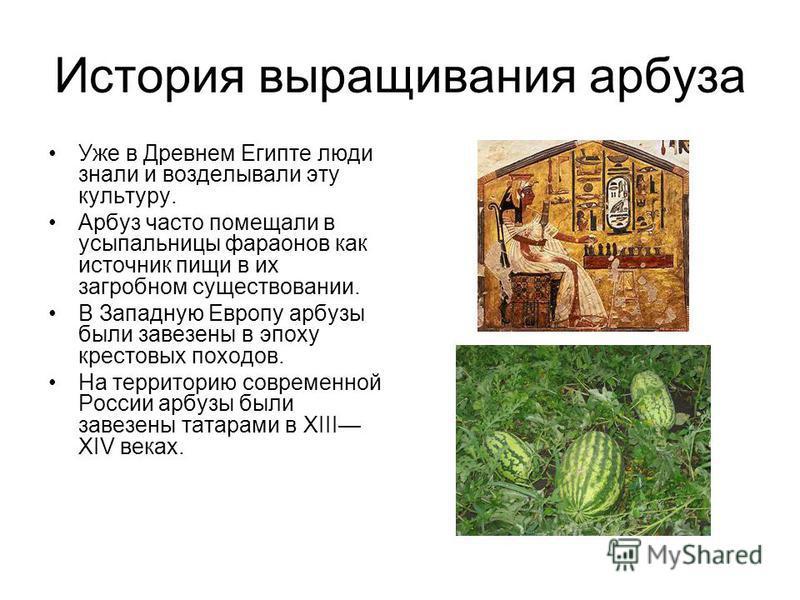 История выращивания арбуза Уже в Древнем Египте люди знали и возделывали эту культуру. Арбуз часто помещали в усыпальницы фараонов как источник пищи в их загробном существовании. В Западную Европу арбузы были завезены в эпоху крестовых походов. На те