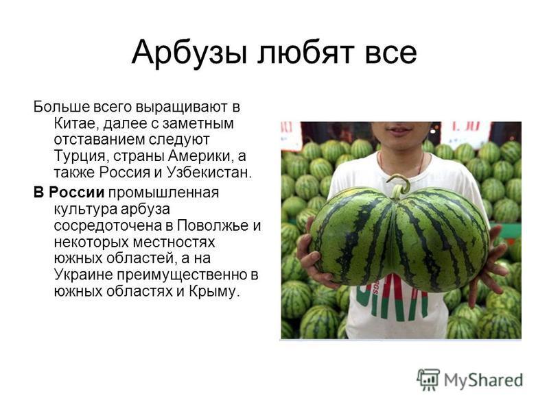 Арбузы любят все Больше всего выращивают в Китае, далее с заметным отставанием следуют Турция, страны Америки, а также Россия и Узбекистан. В России промышленная культура арбуза сосредоточена в Поволжье и некоторых местностях южных областей, а на Укр