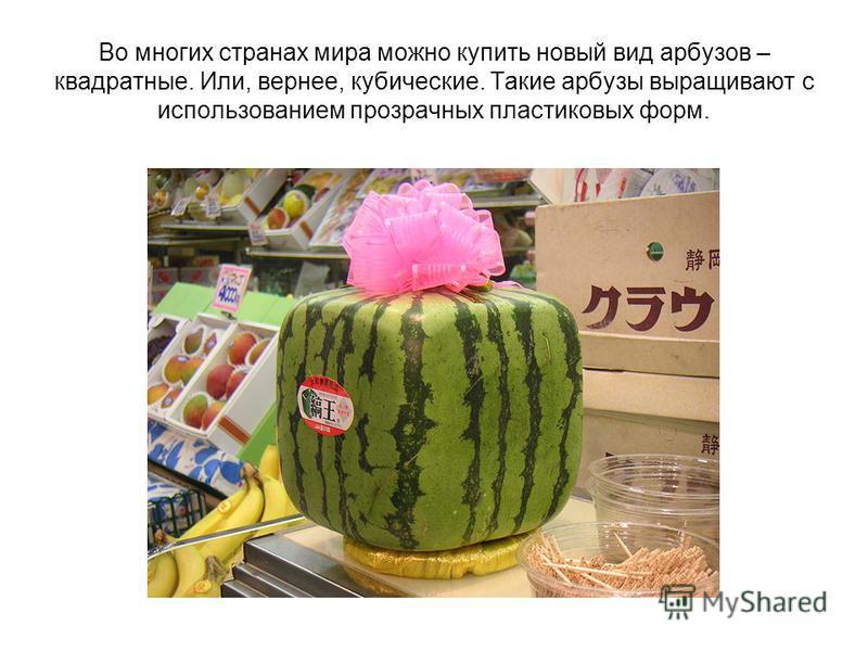 Во многих странах мира можно купить новый вид арбузов – квадратные. Или, вернее, кубические. Такие арбузы выращивают с использованием прозрачных пластиковых форм.