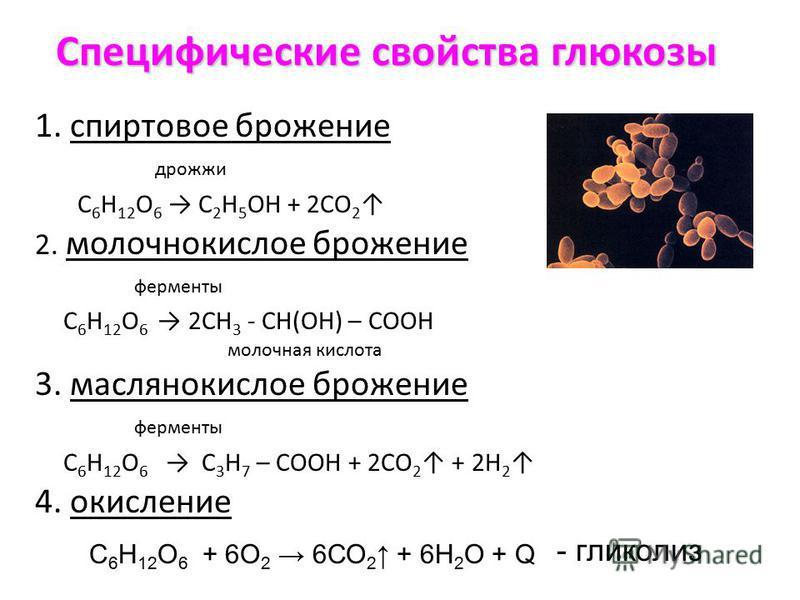 Специфические свойства глюкозы 1. спиртовое брожение дрожжи C 6 Н 12 O 6 С 2 Н 5 ОН + 2СО 2 2. молочнокислое брожение ферменты C 6 Н 12 O 6 2СН 3 - СН(ОН) – СООН молочная кислота 3. маслянокислое брожение ферменты C 6 Н 12 O 6 С 3 Н 7 – СООН + 2СО 2