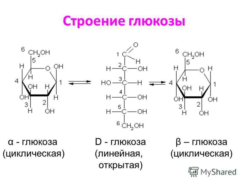 Строение глюкозы α - глюкоза D - глюкоза β – глюкоза (циклическая) (линейная, (циклическая) открытая)