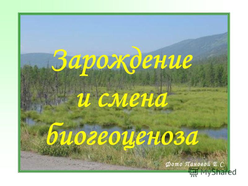 Зарождение и смена биогеоценоза