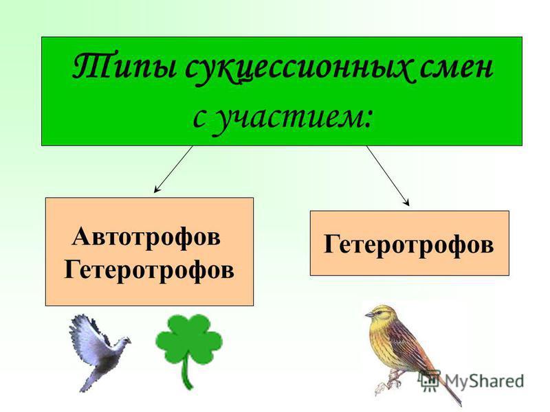 Типы сукцессионных смен с участием: Автотрофов Гетеротрофов
