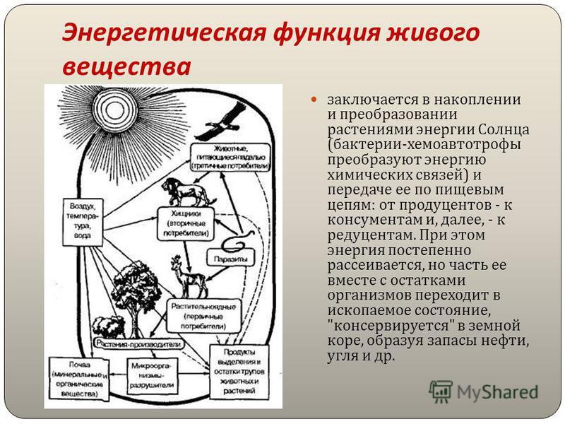 Энергетическая функция живого вещества заключается в накоплении и преобразовании растениями энергии Солнца ( бактерии - хемоавтотрофы преобразуют энергию химических связей ) и передаче ее по пищевым цепям : от продуцентов - к консументам и, далее, -
