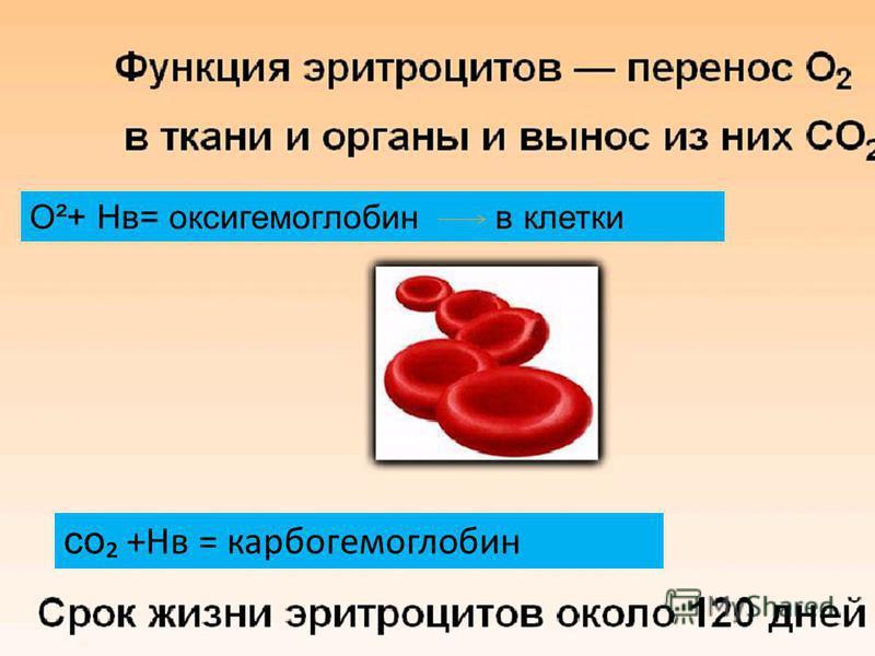 О²+ Нв= оксигемоглобин в клетки со +Нв = карбогемоглобин