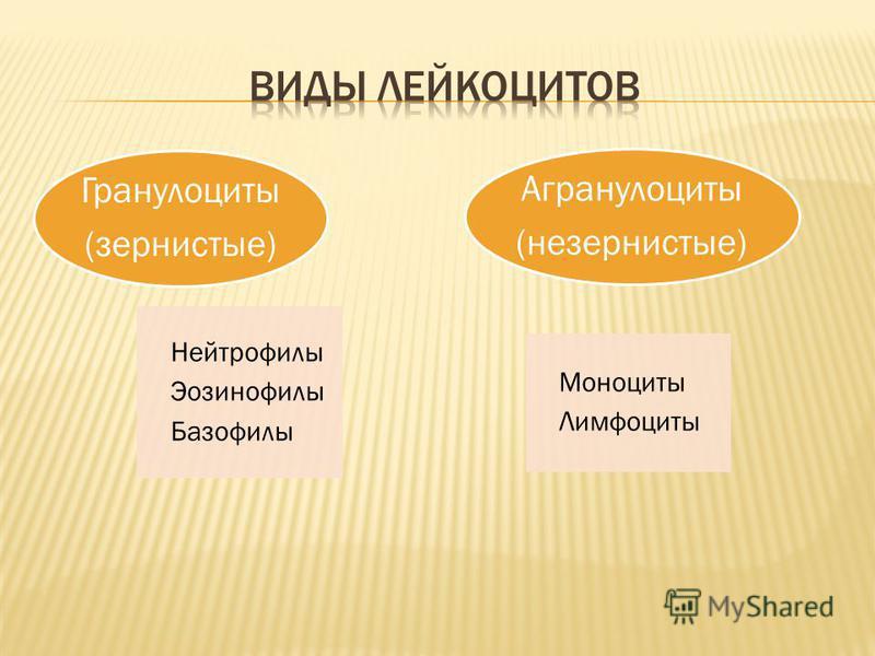 Нейтрофилы Эозинофилы Базофилы Гранулоциты (зернистые) Моноциты Лимфоциты Агранулоциты (незернистые)