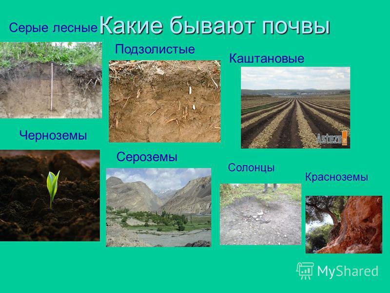 1. Верхний, рыхлый и плодородный слой земли, покрытый растительностью. 2. Выбери, какие вещества входят в состав почвы: песок, глина, вода, воздух, перегной, соли, стекло. 3. Основное свойство почвы. 4. Животные или растения стали первыми обитателями
