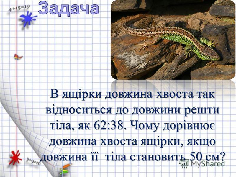 В ящірки довжина хвоста так відноситься до довжини решти тіла, як 62:38. Чому дорівнює довжина хвоста ящірки, якщо довжина її тіла становить 50 см?
