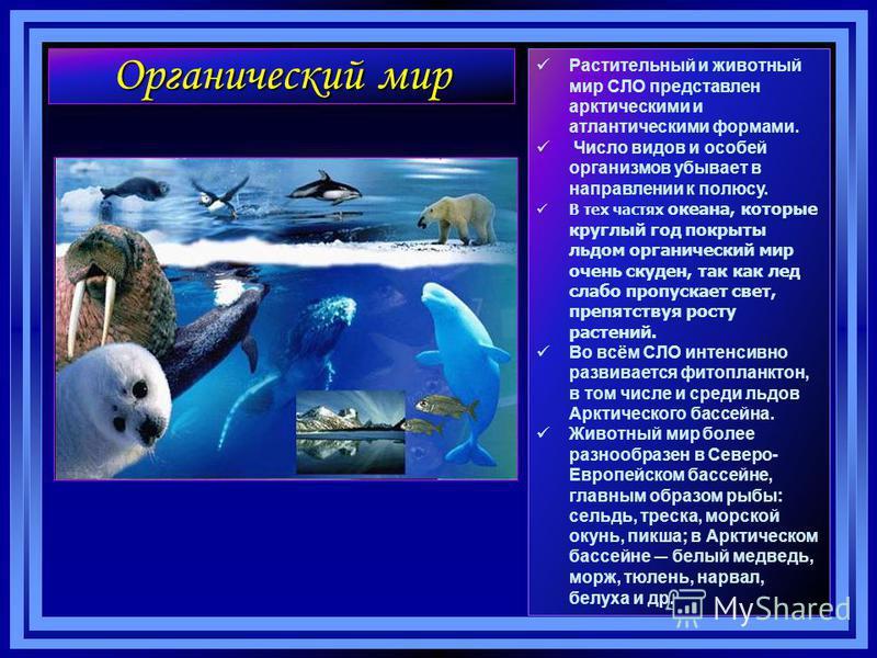 Органический мир Растительный и животный мир СЛО представлен арктическими и атлантическими формами. Число видов и особей организмов убывает в направлении к полюсу. В тех частях океана, которые круглый год покрыты льдом органический мир очень скуден,
