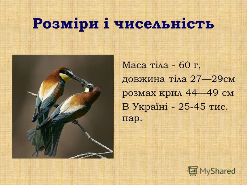 Розміри і чисельність Маса тіла - 60 г, довжина тіла 2729см розмах крил 4449 см В Україні - 25-45 тис. пар.
