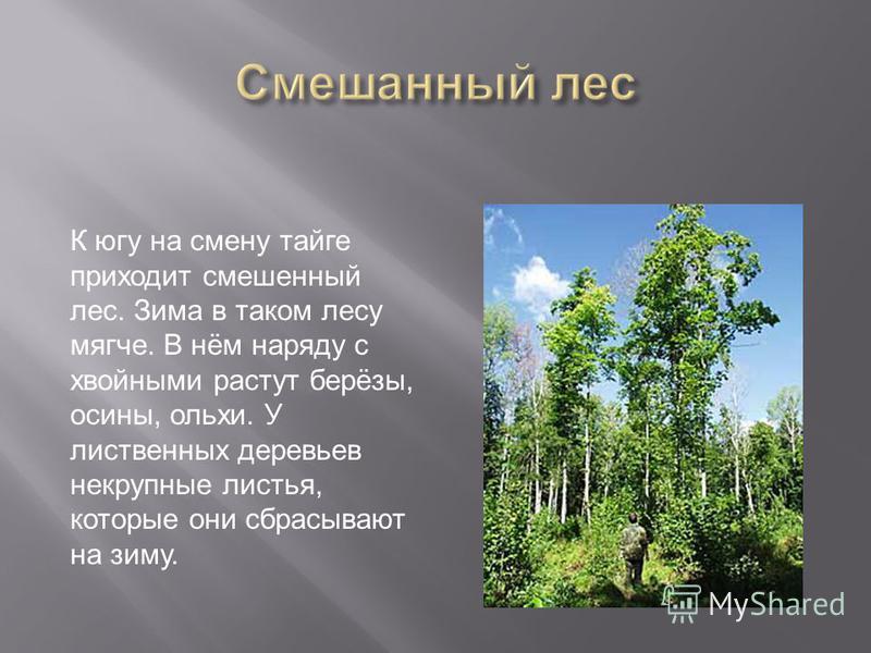 К югу на смену тайге приходит смешенный лес. Зима в таком лесу мягче. В нём наряду с хвойными растут берёзы, осины, ольхи. У лиственных деревьев некрупные листья, которые они сбрасывают на зиму.