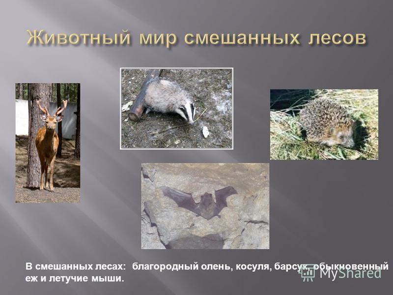 В смешанных лесах: благородный олень, косуля, барсук, обыкновенный еж и летучие мыши.
