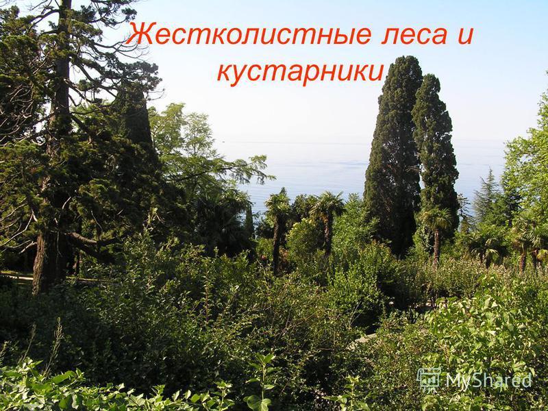 Жестколистные леса и кустарники