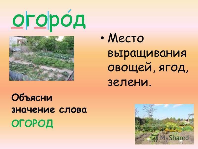 огород Объясни значение слова ОГОРОД Место выращивания овощей, ягод, зелени.
