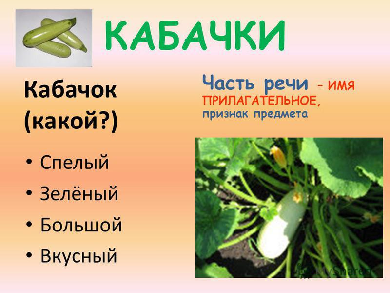 КАБАЧКИ Кабачок (какой?) Часть речи – ИМЯ ПРИЛАГАТЕЛЬНОЕ, признак предмета Спелый Зелёный Большой Вкусный