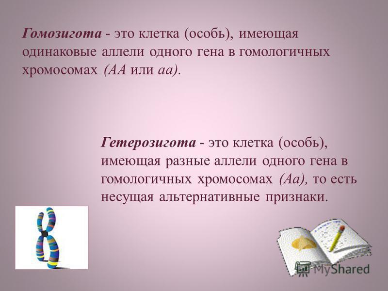 Гомозигота - это клетка (особь), имеющая одинаковые аллели одного гена в гомологичных хромосомах (АА или аа). Гетерозигота - это клетка (особь), имеющая разные аллели одного гена в гомологичных хромосомах (Аа), то есть несущая альтернативные признаки