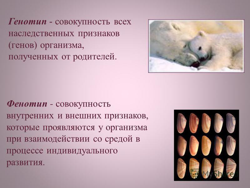 Генотип - совокупность всех наследственных признаков (генов) организма, полученных от родителей. Фенотип - совокупность внутренних и внешних признаков, которые проявляются у организма при взаимодействии со средой в процессе индивидуального развития.