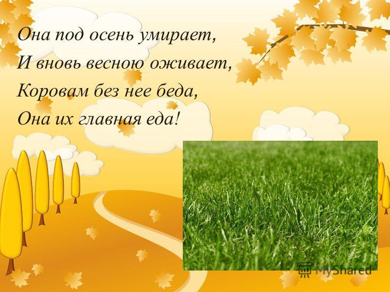 Она под осень умирает, И вновь весною оживает, Коровам без нее беда, Она их главная еда!