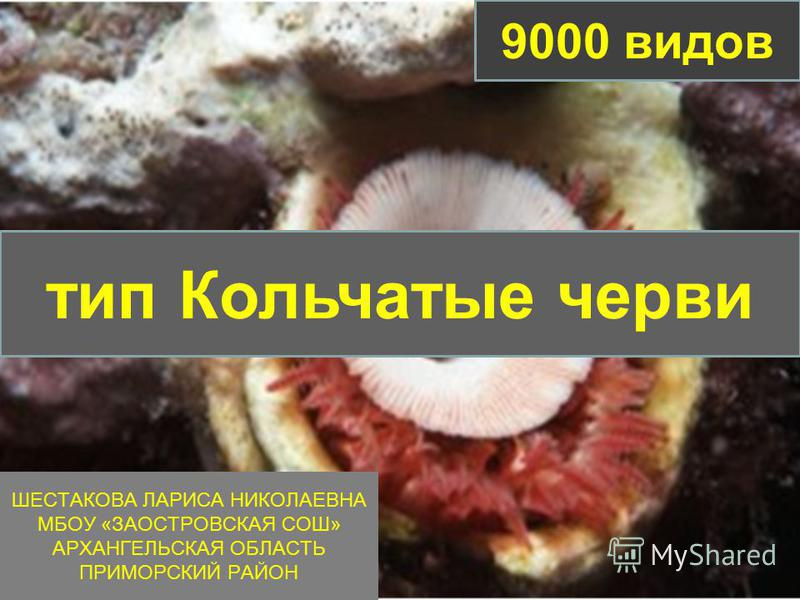 ШЕСТАКОВА ЛАРИСА НИКОЛАЕВНА МБОУ «ЗАОСТРОВСКАЯ СОШ» АРХАНГЕЛЬСКАЯ ОБЛАСТЬ ПРИМОРСКИЙ РАЙОН тип Кольчатые черви 9000 видов