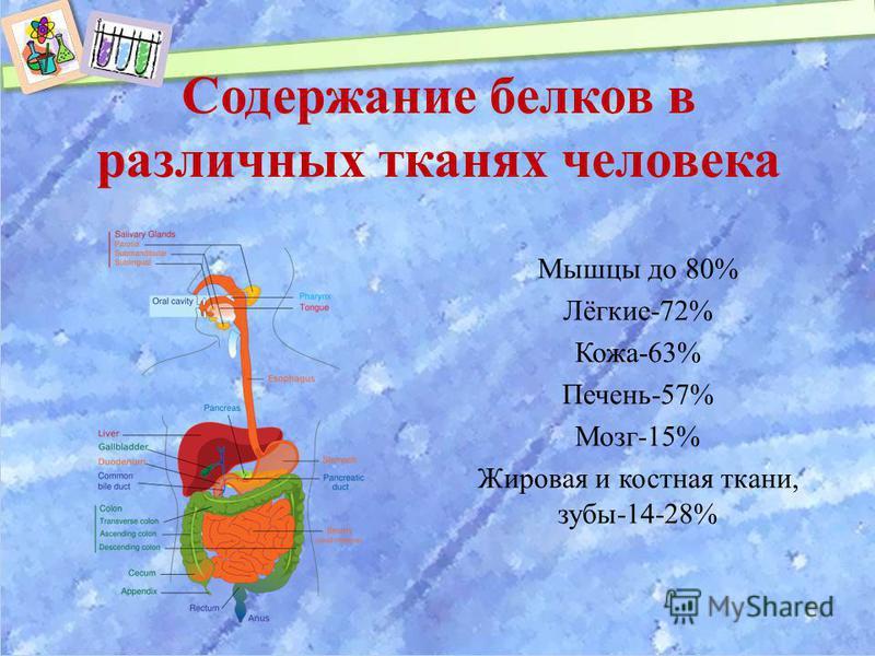 Содержание белков в различных тканях человека Мышцы до 80% Лёгкие-72% Кожа-63% Печень-57% Мозг-15% Жировая и костная ткани, зубы-14-28%