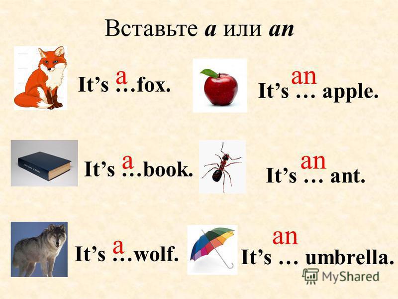 Вставьте a или an Its …book. Its … ant. Its …fox. a a an Its …wolf. a an Its … umbrella. Its … apple.