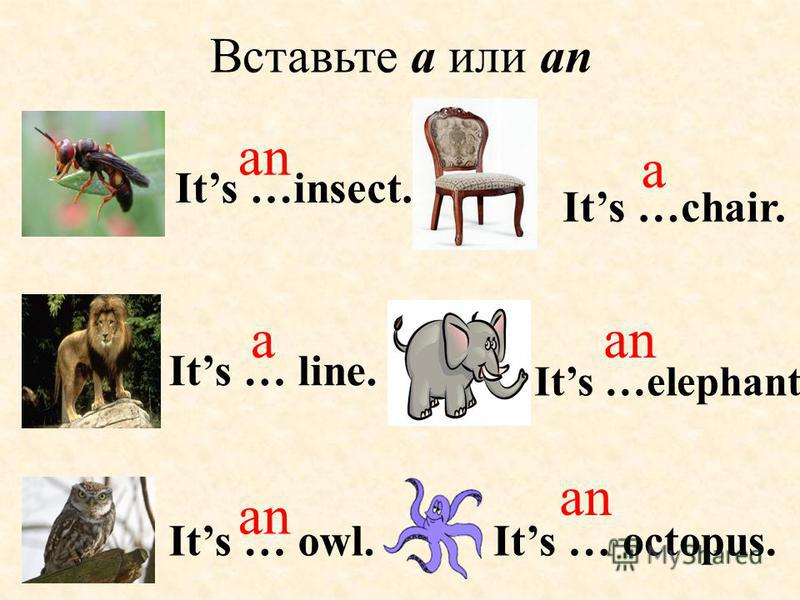 Its … octopus.Its … owl. an Вставьте a или an Its …insect. Its …elephant. Its …chair. Its … line. an a a