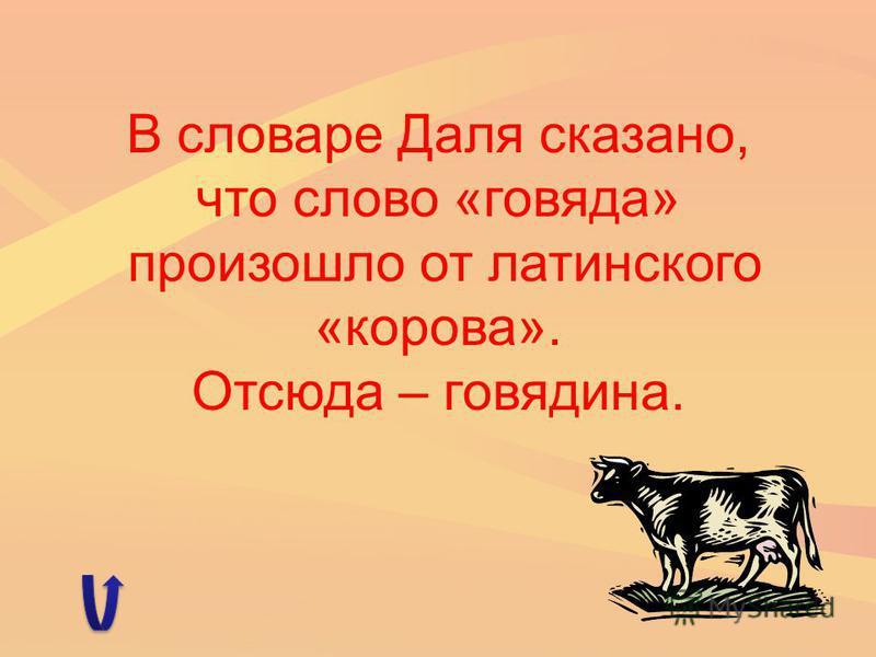 В словаре Даля сказано, что слово «говяда» произошло от латинского «корова». Отсюда – говядина.