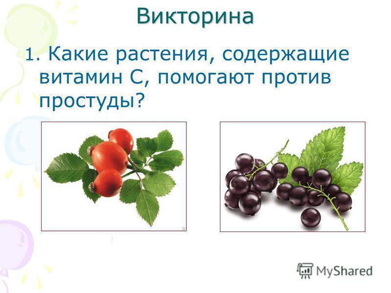 Викторина 1. Какие растения, содержащие витамин С, помогают против простуды?