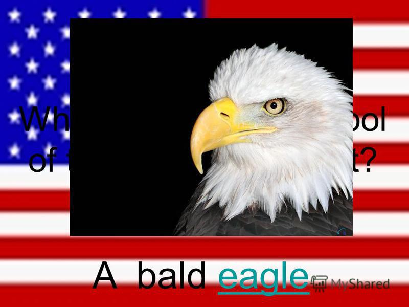 What animal is a symbol of the US government? A bald eagleeagle