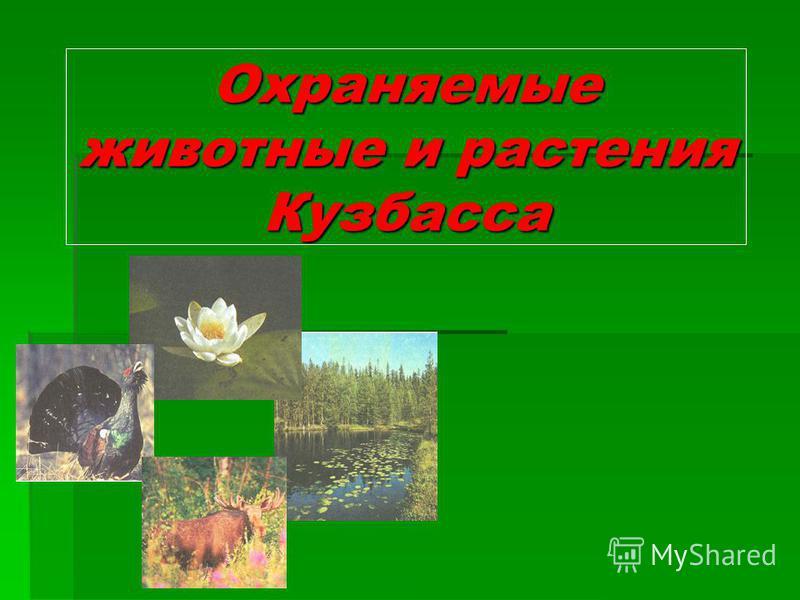 Охраняемые животные и растения Кузбасса