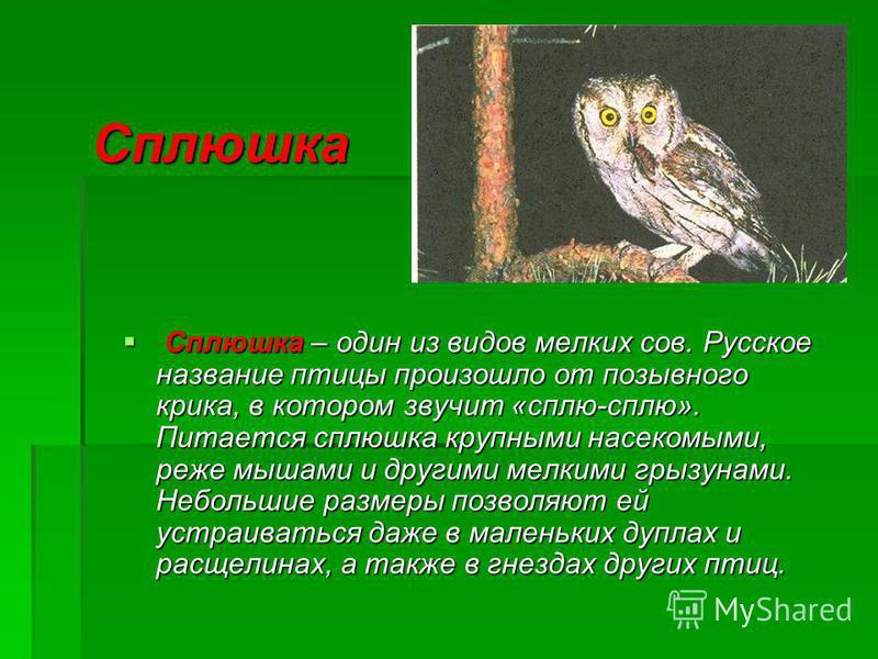 Сплюшка Сплюшка – один из видов мелких сов. Русское название птицы произошло от позывного крика, в котором звучит «сплю-сплю». Питается сплюшка крупными насекомыми, реже мышами и другими мелкими грызунами. Небольшие размеры позволяют ей устраиваться