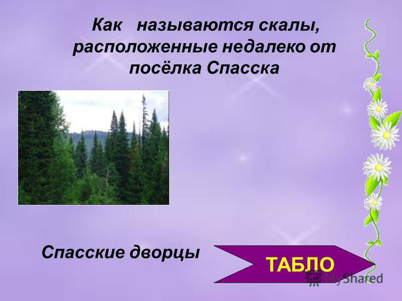 ТАБЛО Самая большая горная система Кемеровской области Кузнецкий Алатау