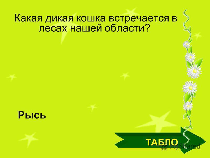 Какие хвойные деревья распространены на территории Кемеровской области? ТАБЛО Пихта, сосна, кедр, ель, лиственница