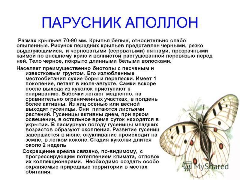 ПАРУСНИК АПОЛЛОН Населяет преимущественно биотопы с песчаным и известковым грунтом. Его излюбленные местообитания сухие боры и перелески. Имеет 1 поколение, летает в июле-августе. Самки вскоре после выхода из куколок приступают к спариванию. Бабочки