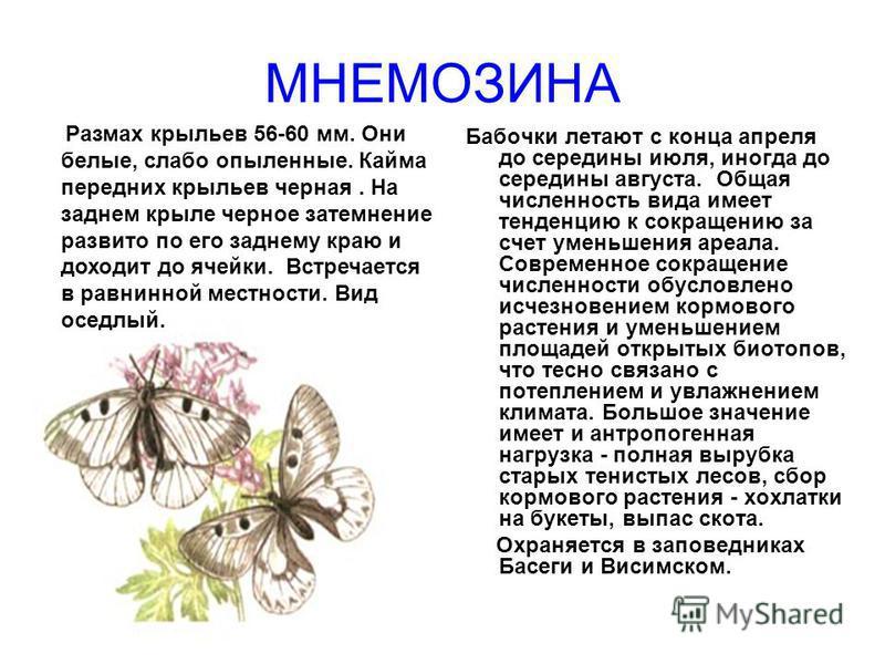 МНЕМОЗИНА Бабочки летают с конца апреля до середины июля, иногда до середины августа. Общая численность вида имеет тенденцию к сокращению за счет уменьшения ареала. Современное сокращение численности обусловлено исчезновением кормового растения и уме