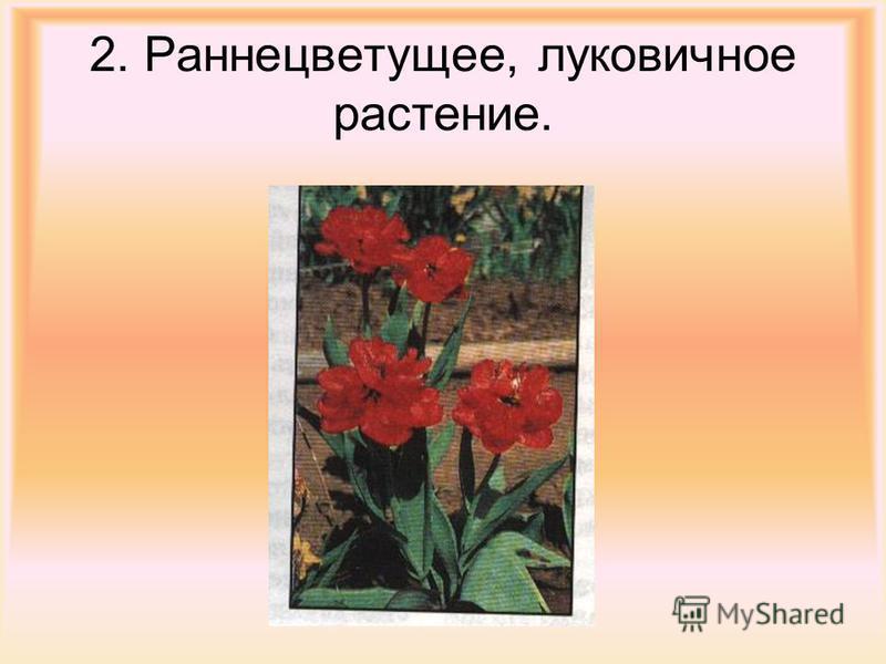 2. Раннецветущее, луковичное растение.