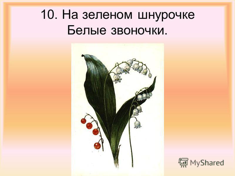 10. На зеленом шнурочке Белые звоночки.