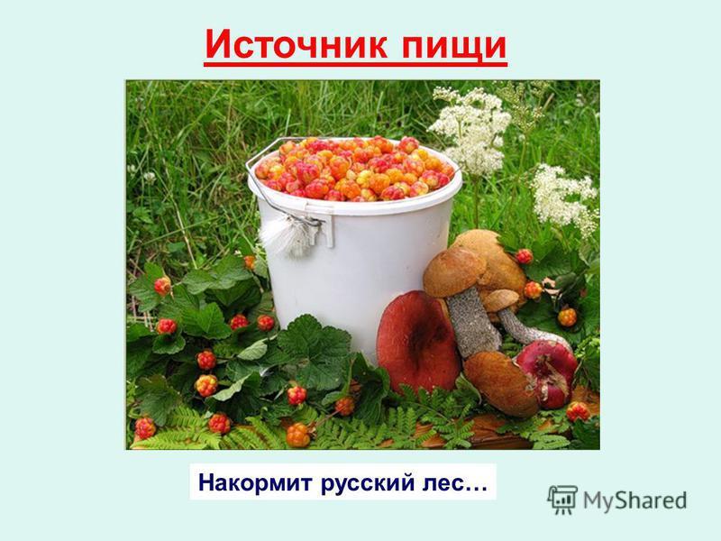 Накормит русский лес… Источник пищи