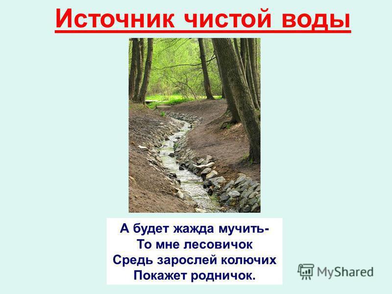 Источник чистой воды А будет жажда мучить- То мне лесовичок Средь зарослей колючих Покажет родничок.